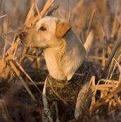 Koiraliivi 3mm Neopreeniä Avery Marsh Grass maastokuvio.